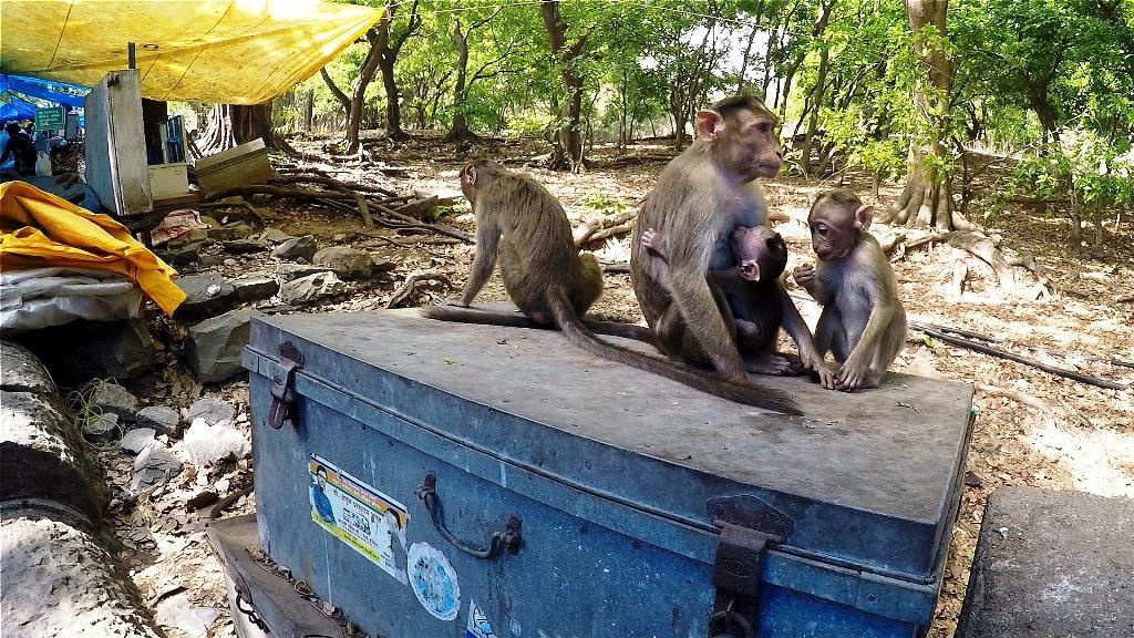 Affen als ständige Wegbegleiter