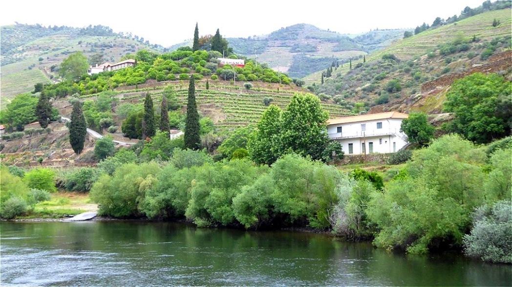 """Flussabschnitt """"Cima Corgo"""" - die hier produzierten Weine gelten als die besten Portugals"""