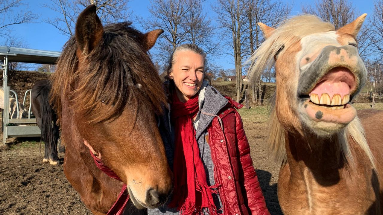 Pferde pic18