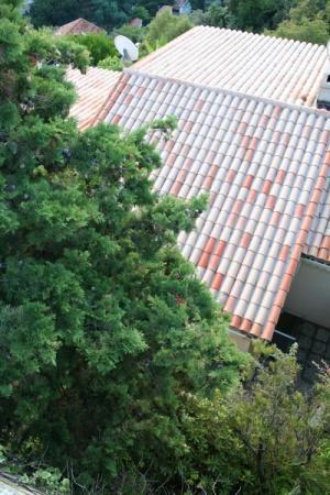 Vue du cyprés avant le démontage/ELAGAGE