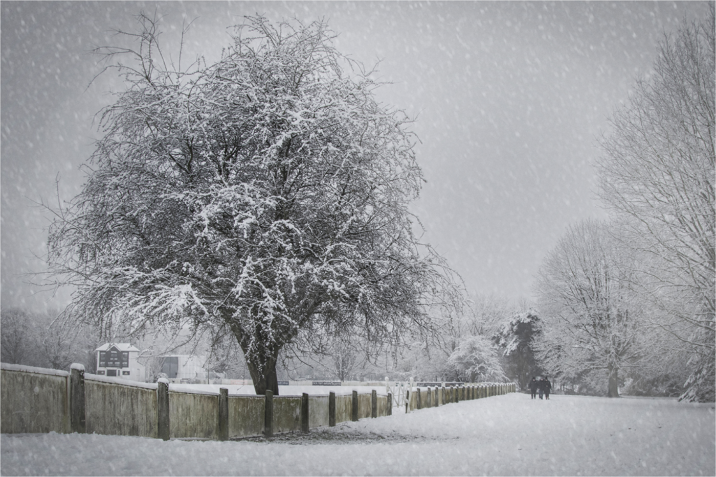Commended: Winter Day on Tettenhall Green (Franco Colabella)