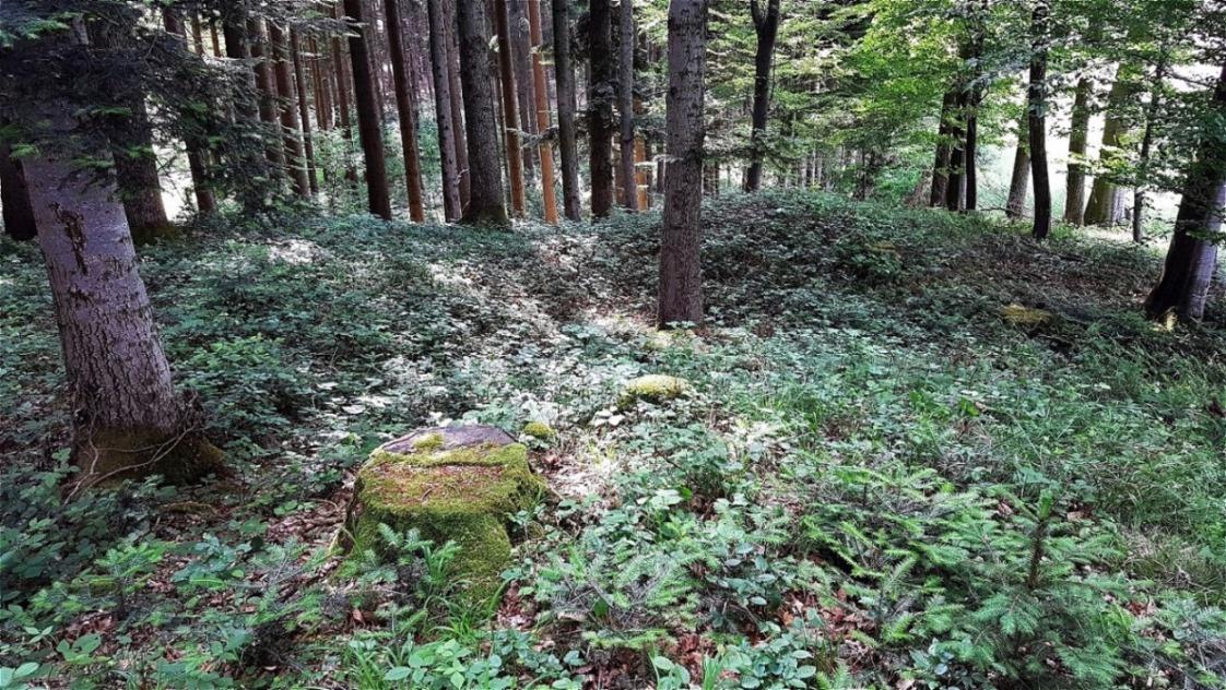 Blick über das Grabungsareal