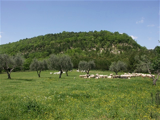 Schafe und Ziegen als Wegbegleiter