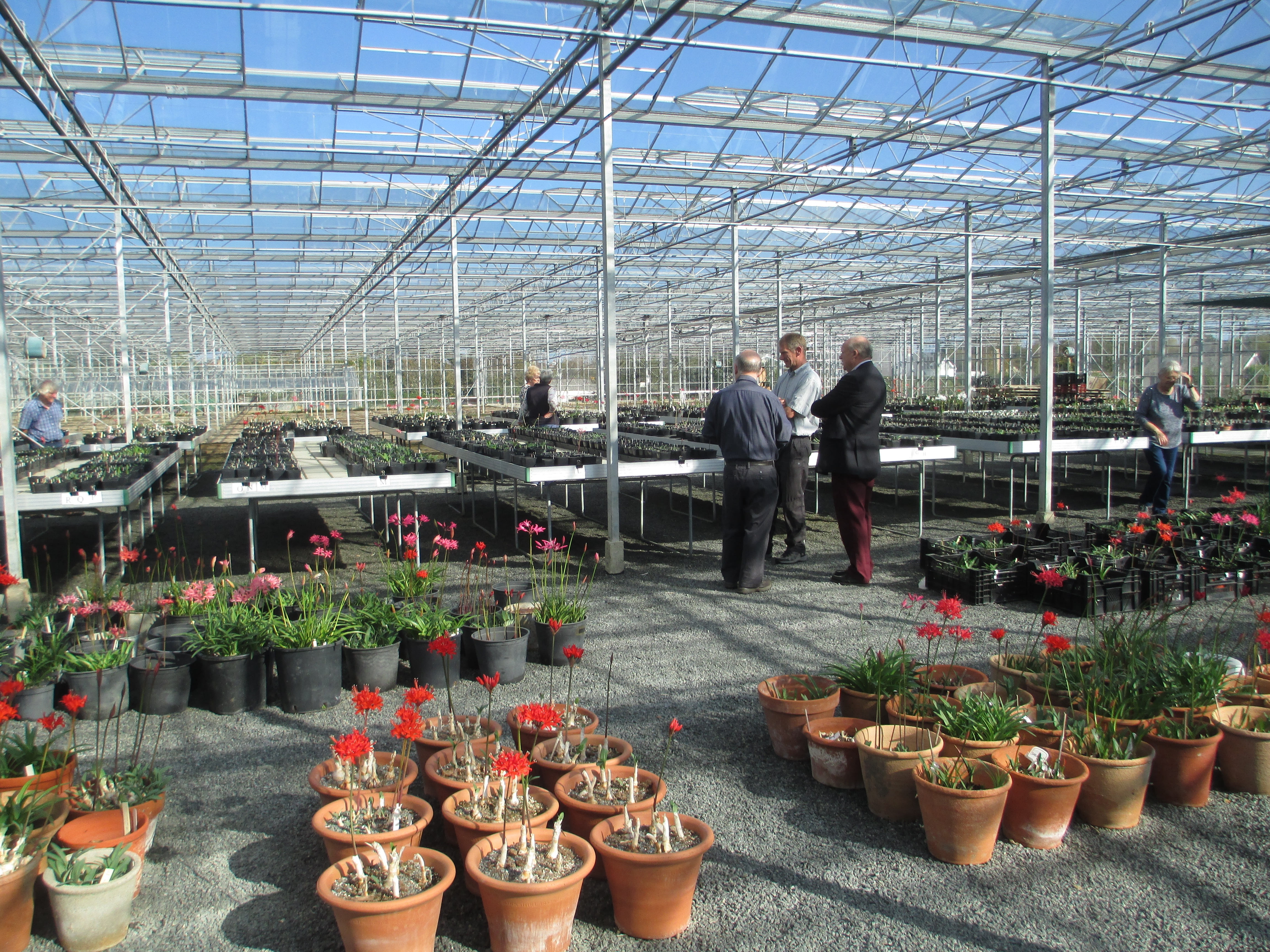 Glasshouse where the National collection is housed. NAAS member Jonny is in discussion with Andrew Lanoe and David Fermont, Plant Heritage Guernsey Chairman.
