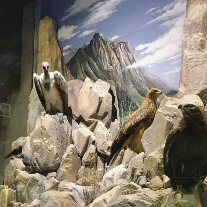 Εκθέματα Μουσείου