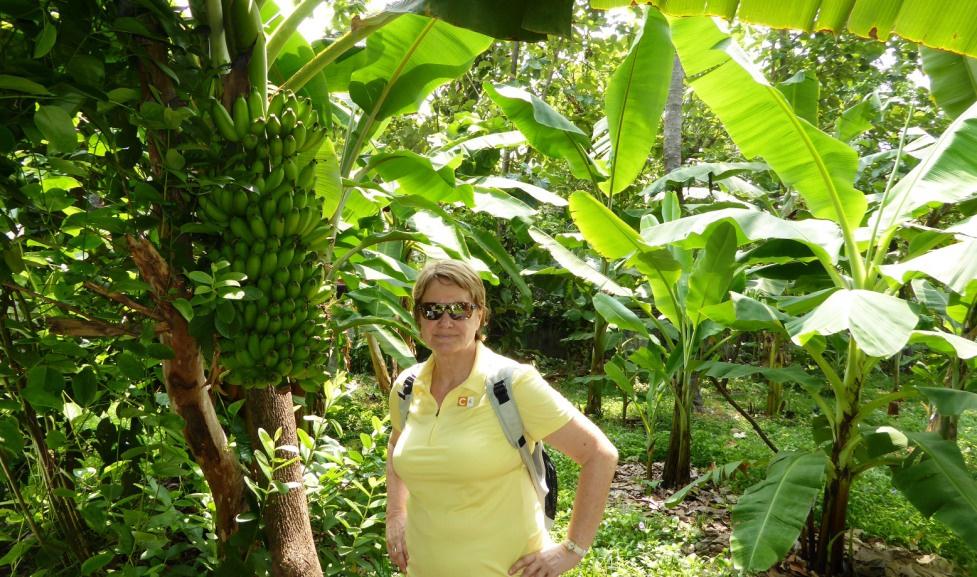 Im tropischen Garten