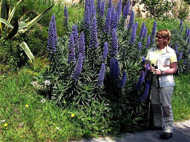 """Blaues Blütenwunder"" am Ortsausgang"