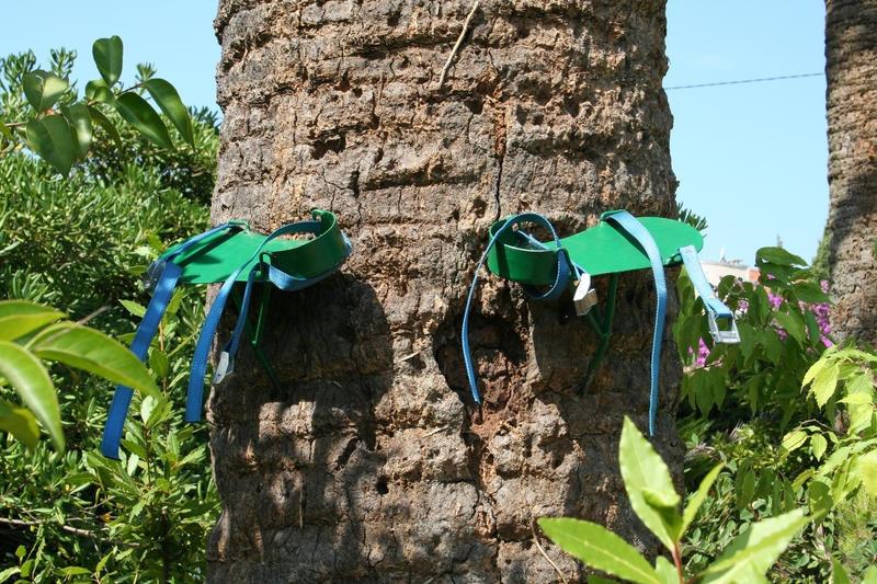 Les griffes pour monter et descendre du palmier