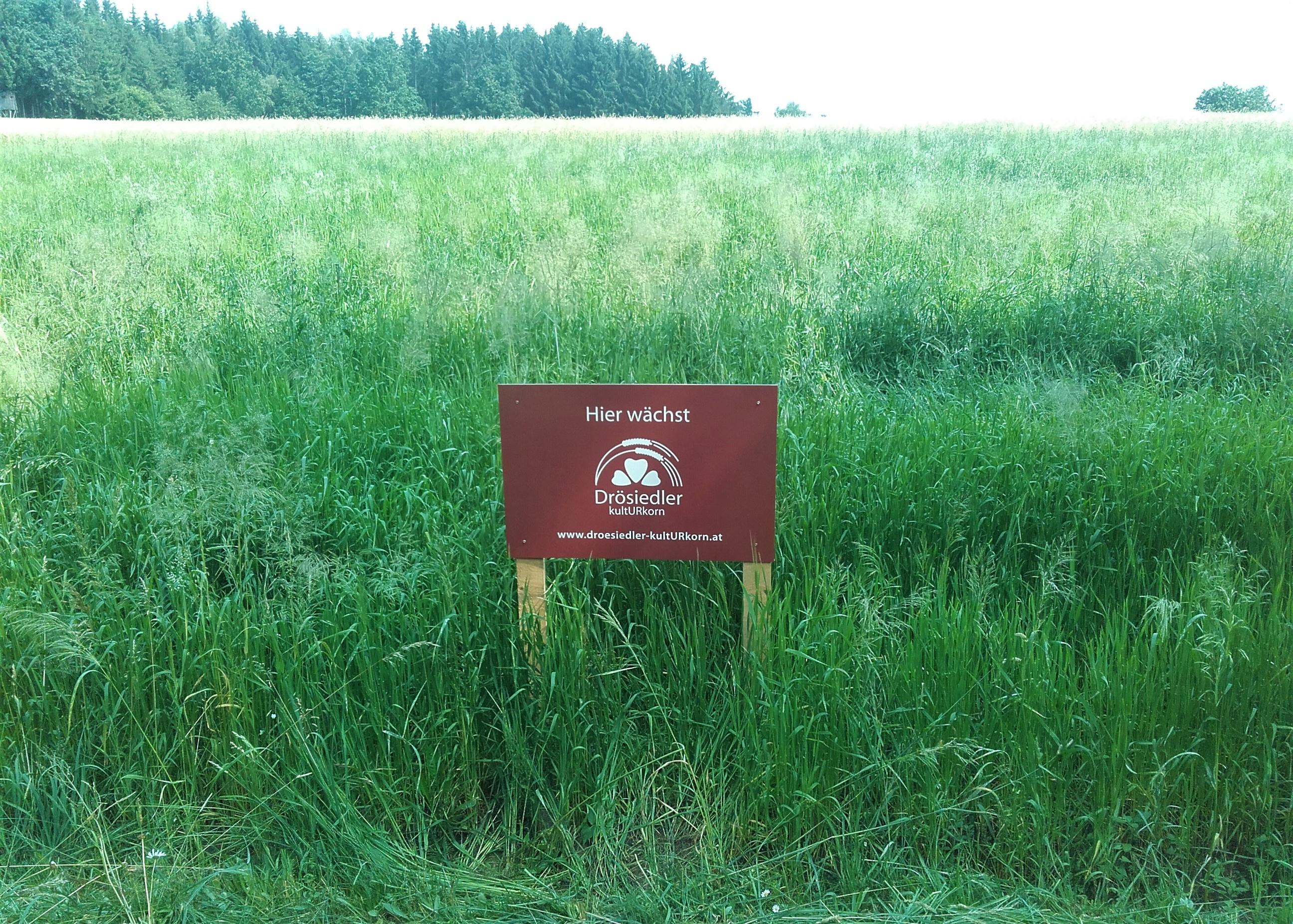 Einkornfeld mit unseren neuen Feldtafeln