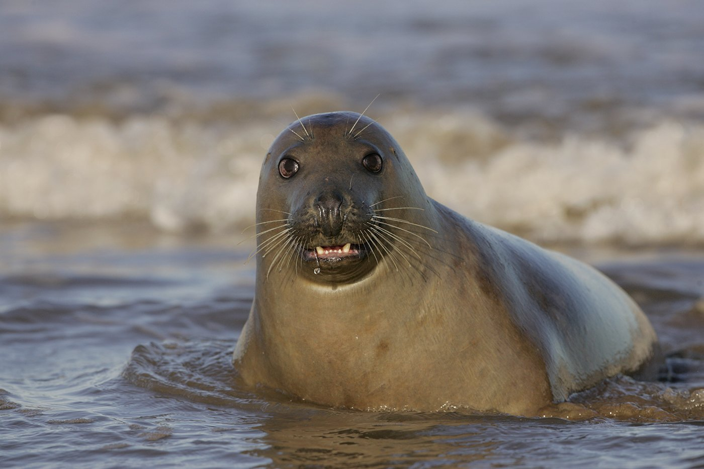 3rd Place: Seal (Andy Snape)