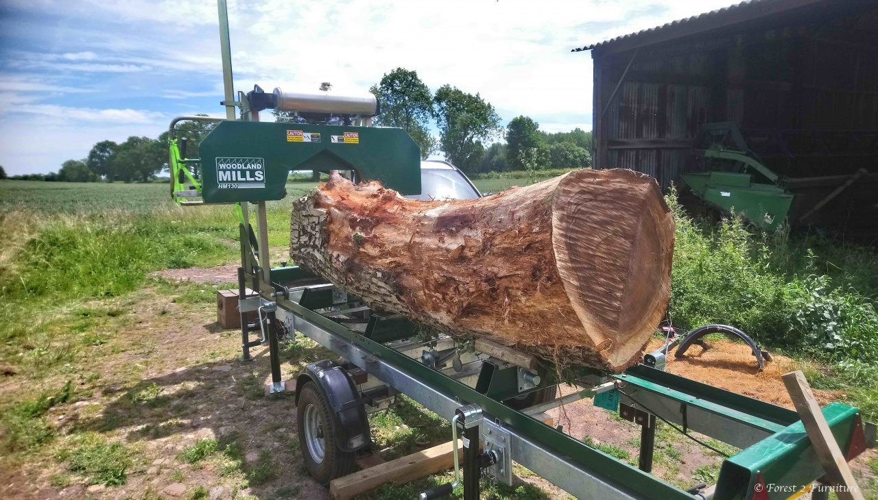 Walnut tree trunk loaded on mobile bandsaw mill awaiting milling to begin