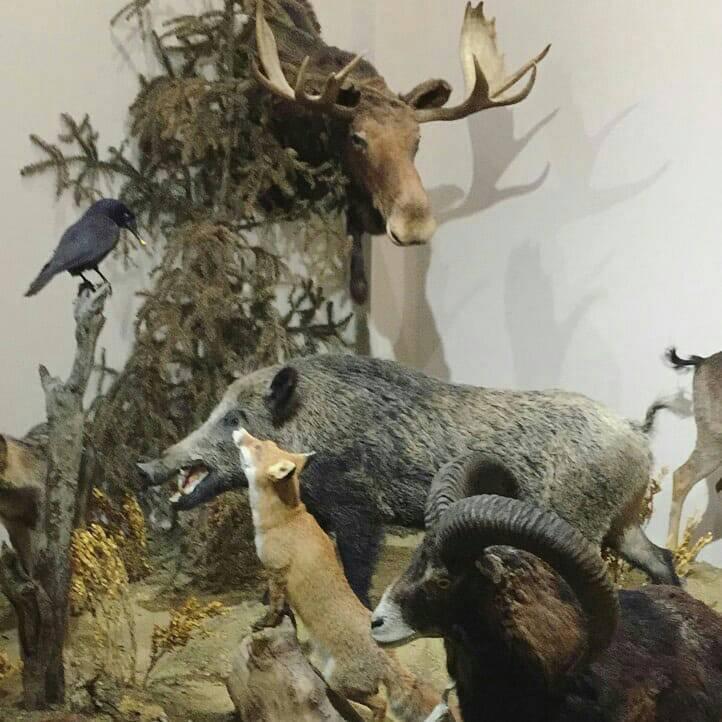 Απεικονίσεις ζώων