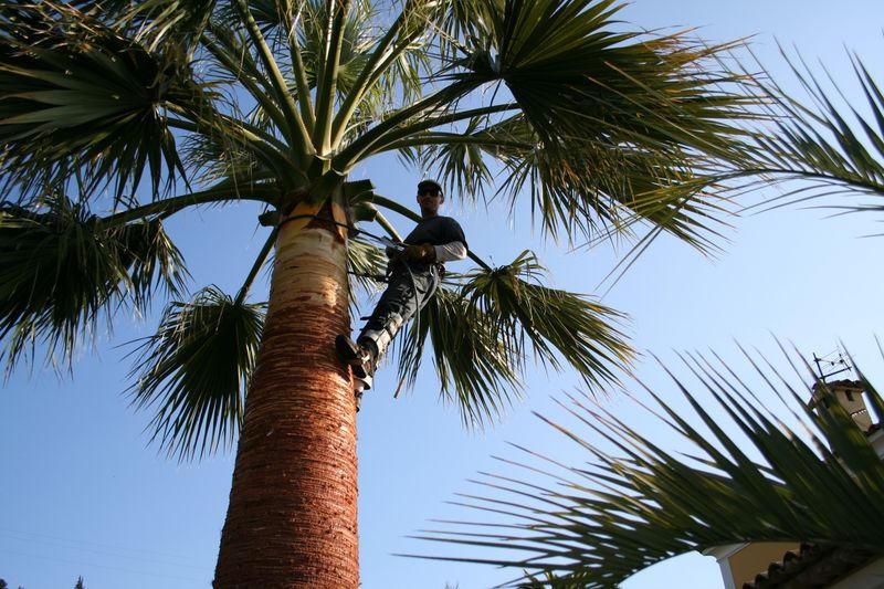 Moi même en fin de taille du palmier