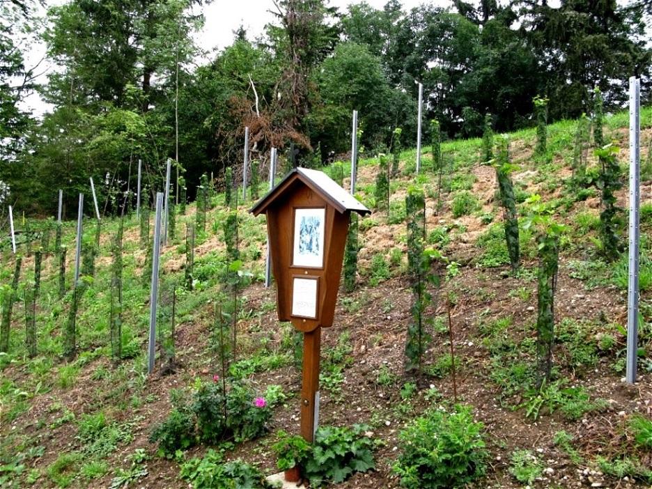 Kreuzwegstation beim Weingarten