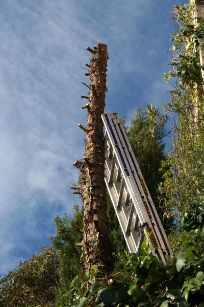Branches supprimées tronc en train d`être débité