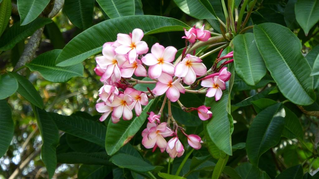 Blütenpracht empfängt uns