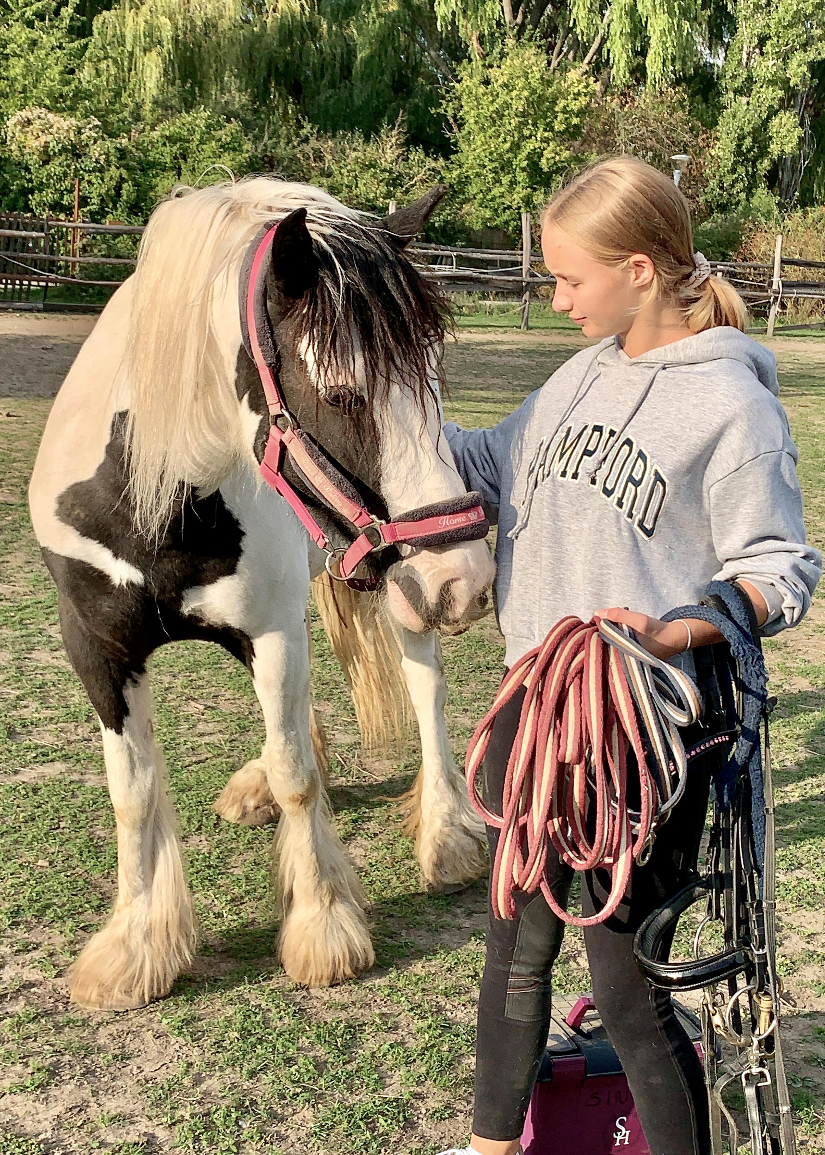 Pferde pic10