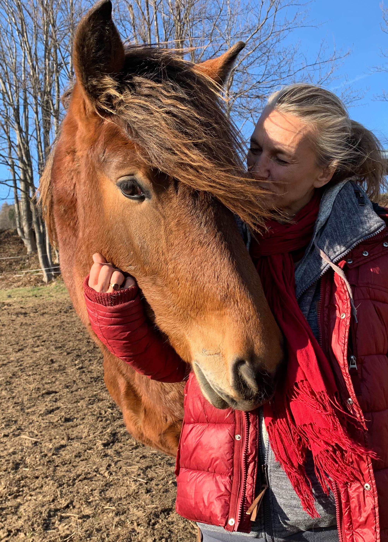 Pferde pic11
