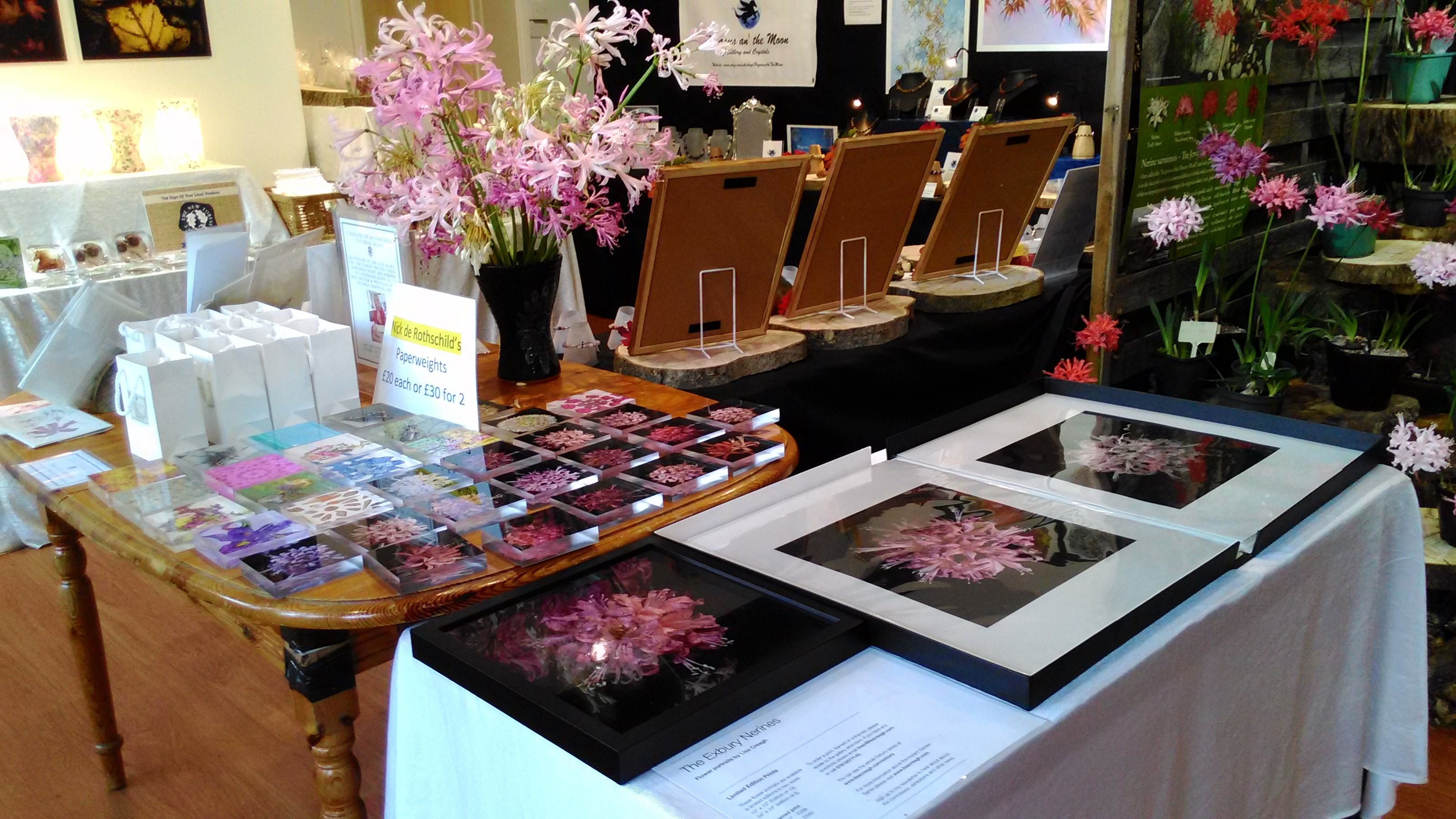 Pictures of Nerines and other related items available to purchase in the Gallery.