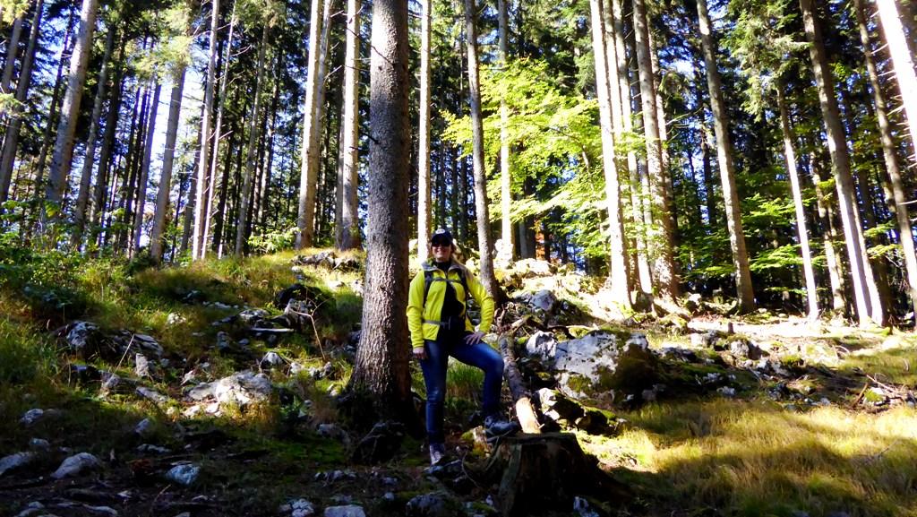 Durch Wald weiter aufwärts
