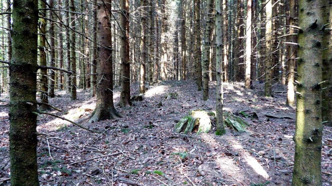 Grabhügel 2 im südlichen Teil des Galgenholzes