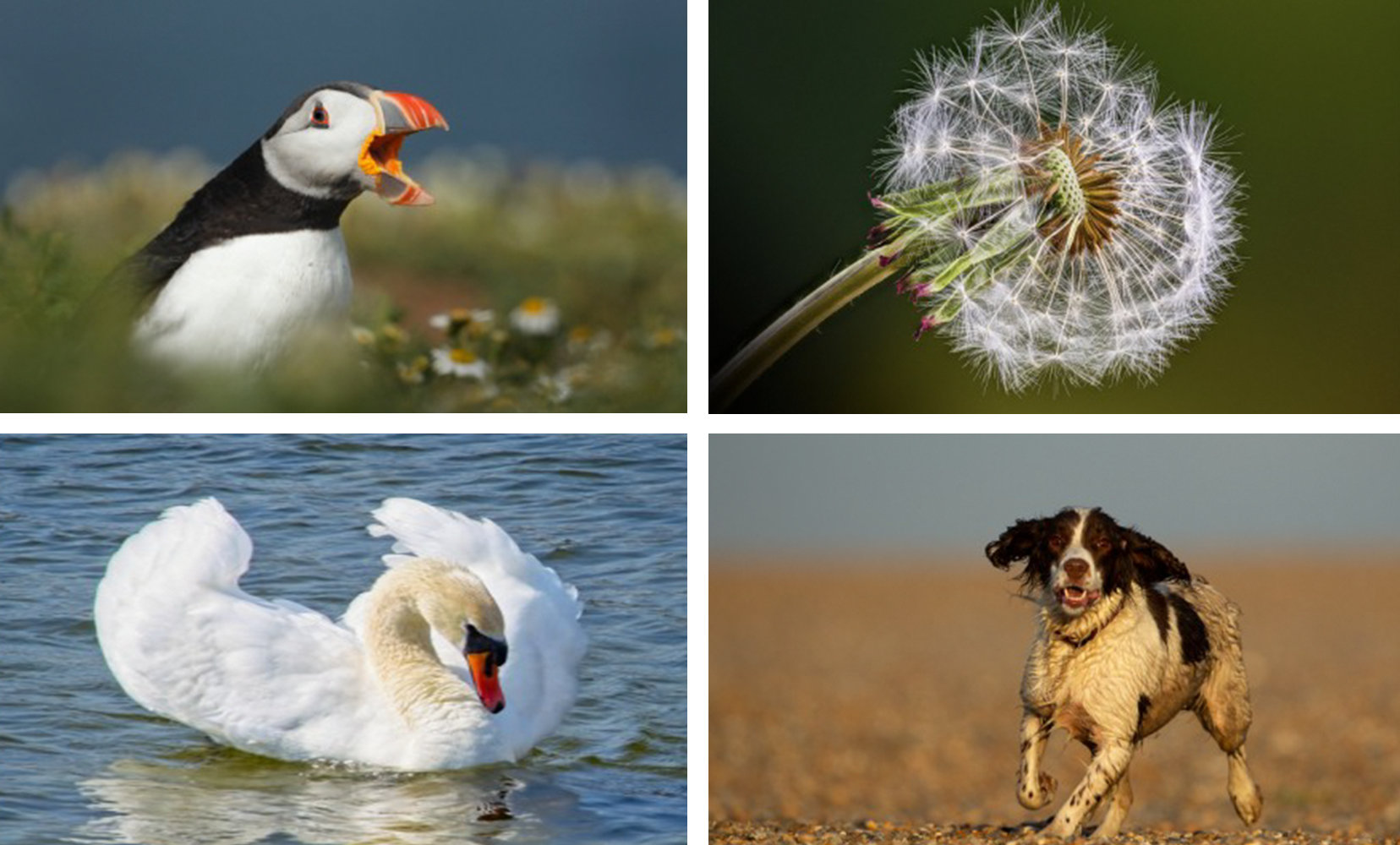 Puffin Calling (Andy Snape), Dandelion (Michael Bull), Hello Ladies (Fraser Johnston), Rex (Andy Snape)
