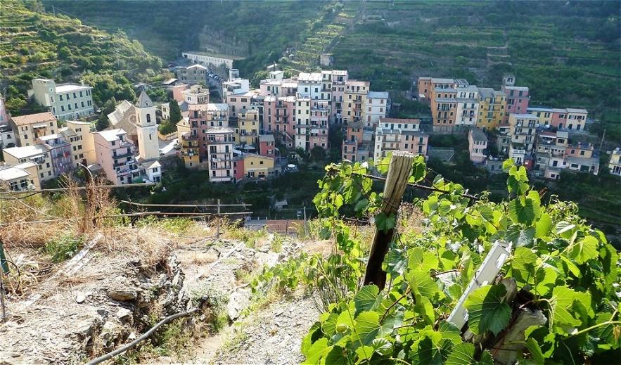 Traditionell wird in Manarola Wein hergestellt und Fischfang betrieben. Der lokale Wein wird Sciacchetrà genannt. Alte römische Schriften berichten schon von diesem Wein