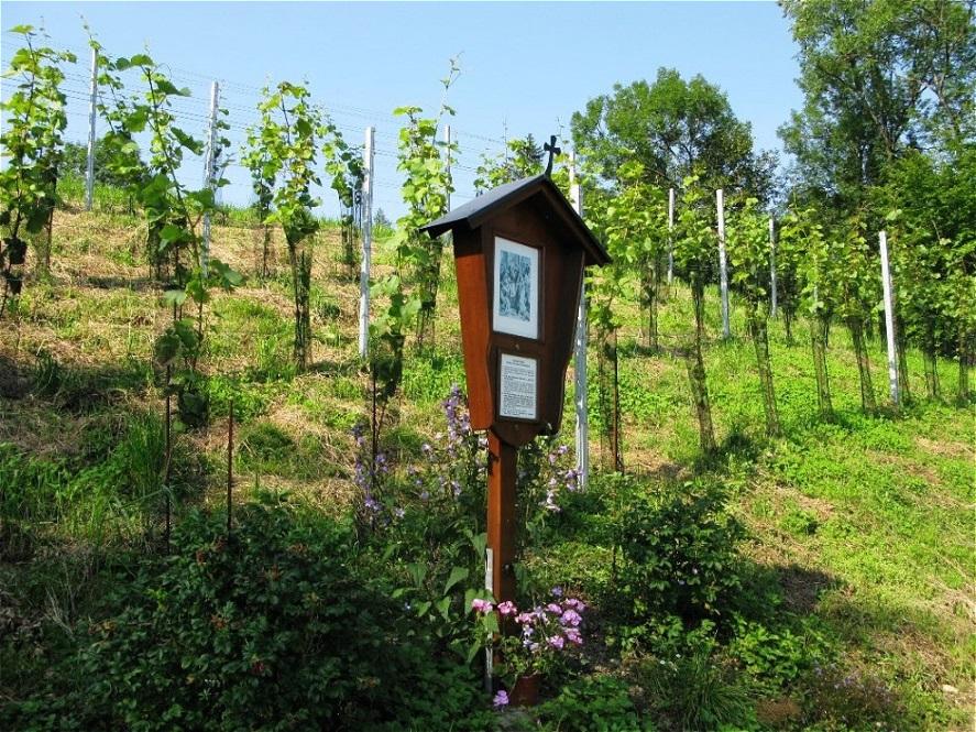 Der Weingarten - 14. Juli 2009