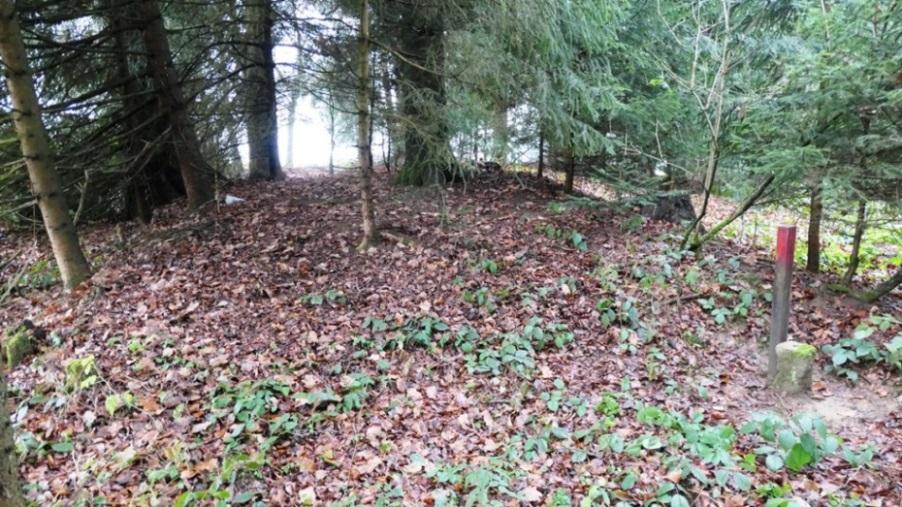 Grabhügel am südwestlichen Waldrand