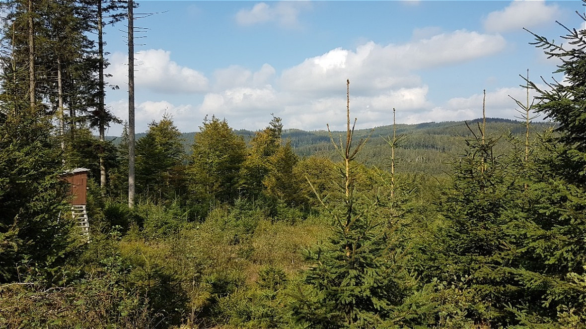 Kobernaußerwald - Ahornbergrücken