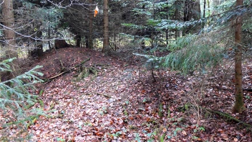 Tumulus im Jungwald