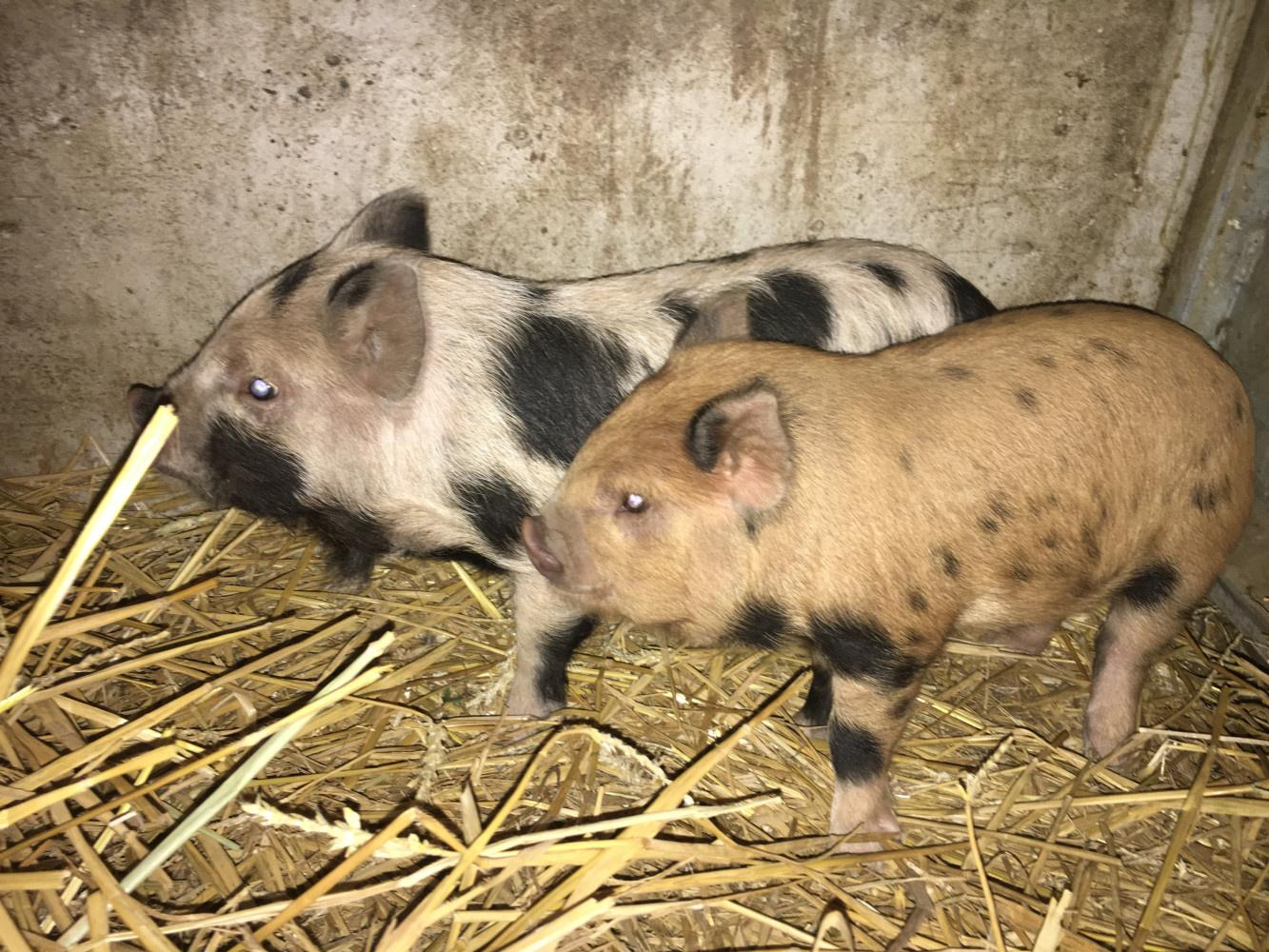 Winnie et Porcinet bébés