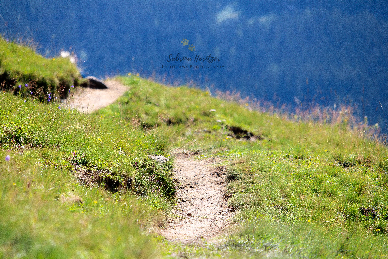 """Almwanderweg """"Der Weg ist das Ziel"""""""