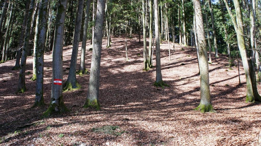 Die Hügel am Waldeingang sind riesig und haben alle eine symmetrische Form