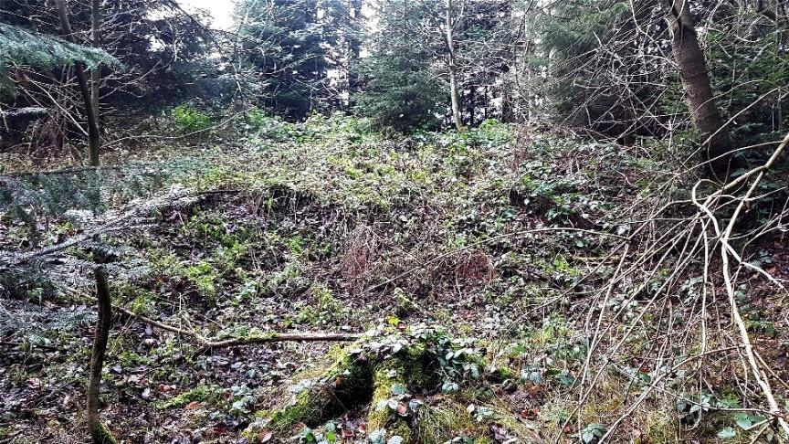 Tumuli von Dornengestrüpp überwuchert