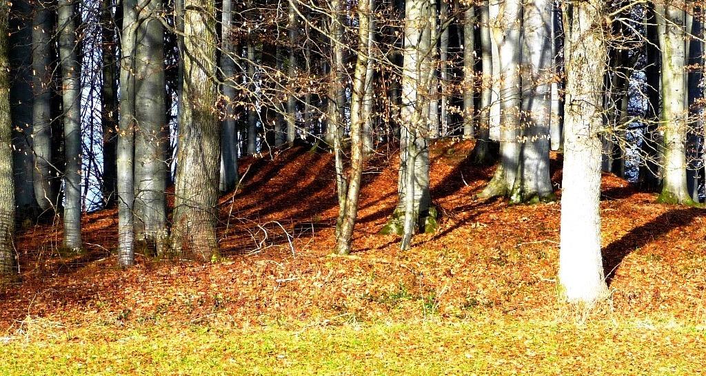Der große Tumulus am Waldrand