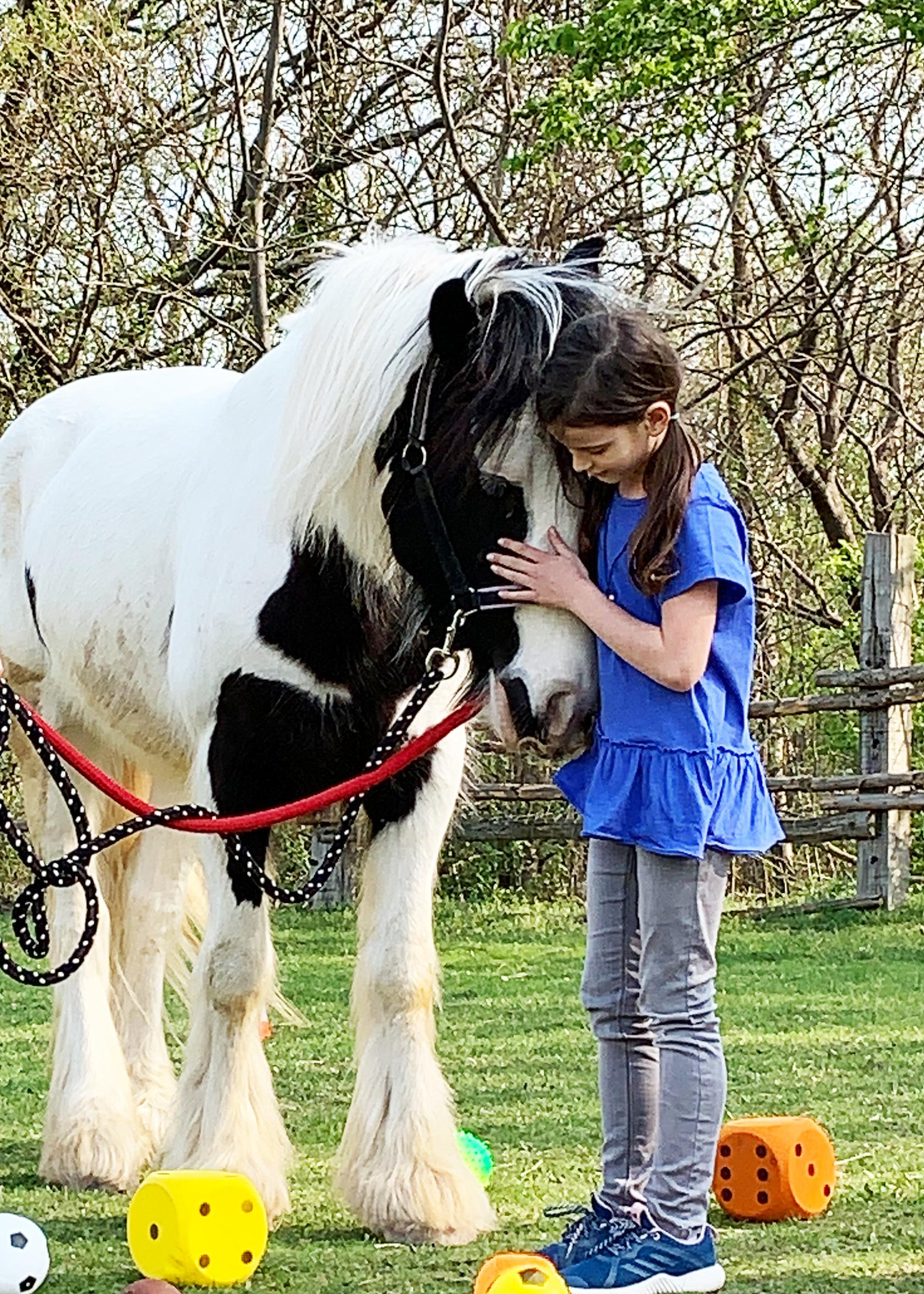 Pferde pic16