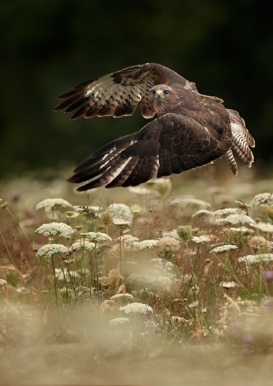 1st Place: Buzzard Take Off (Andy Snape)