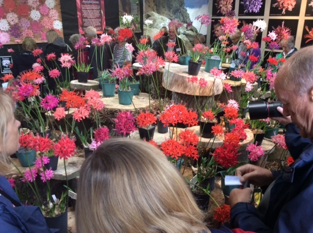 Visitors enjoying studying and photographing the blooms