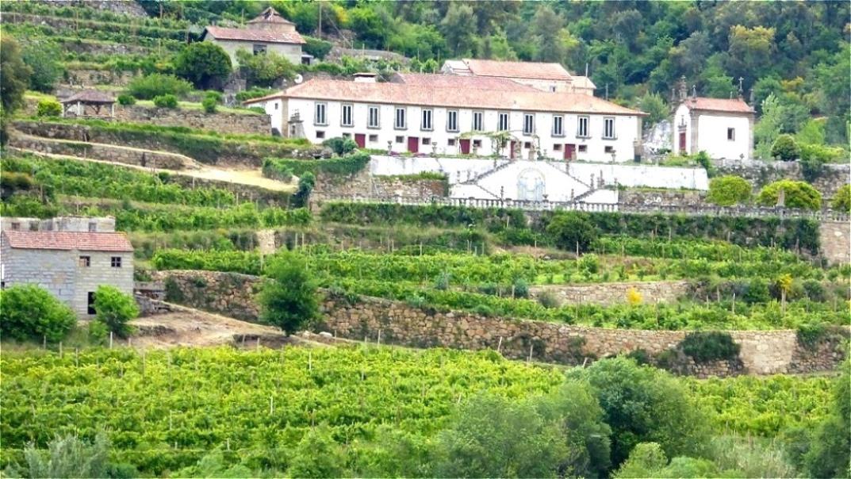 Quinta - Weinbaubetrieb