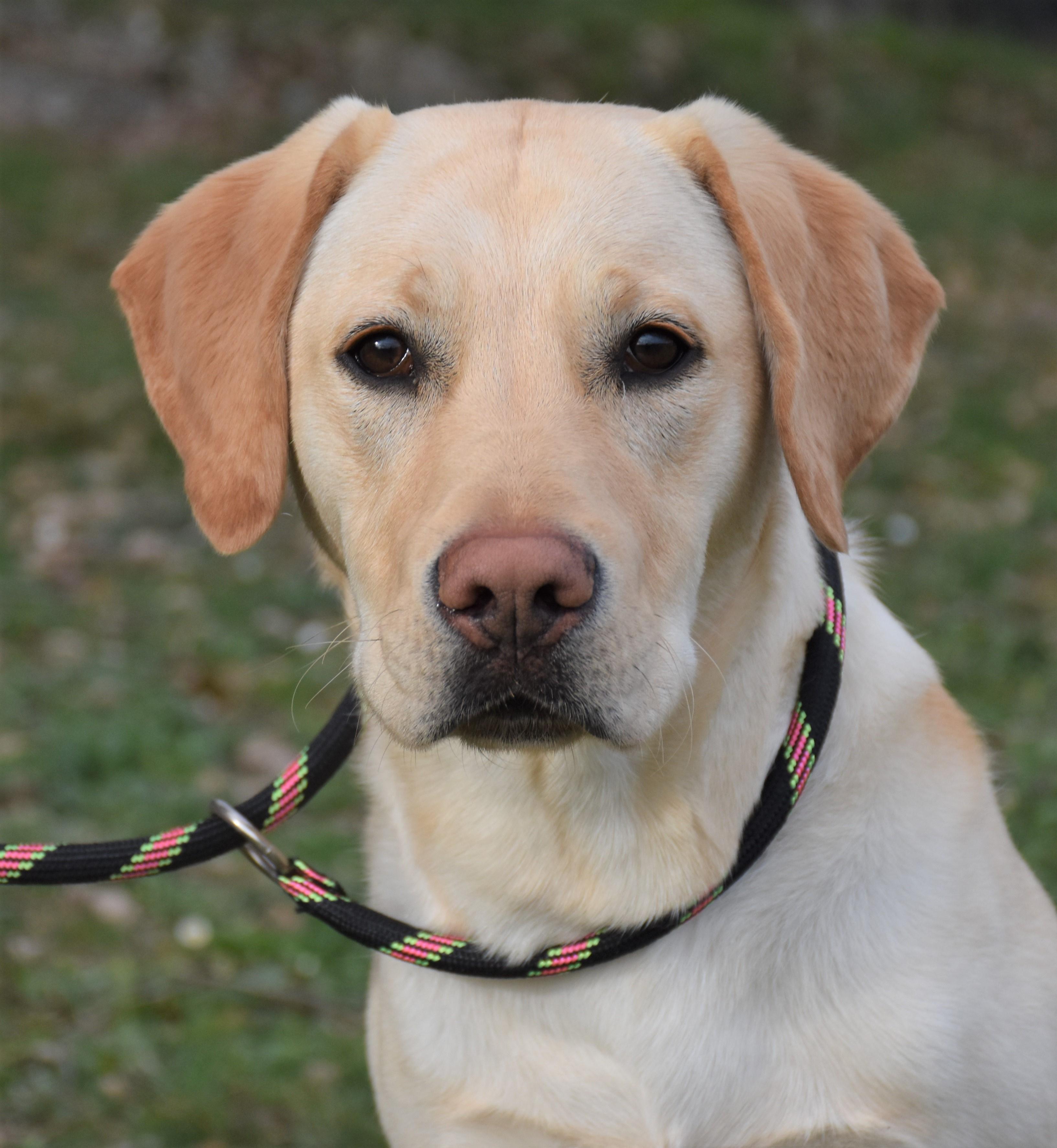 Paco Labrador