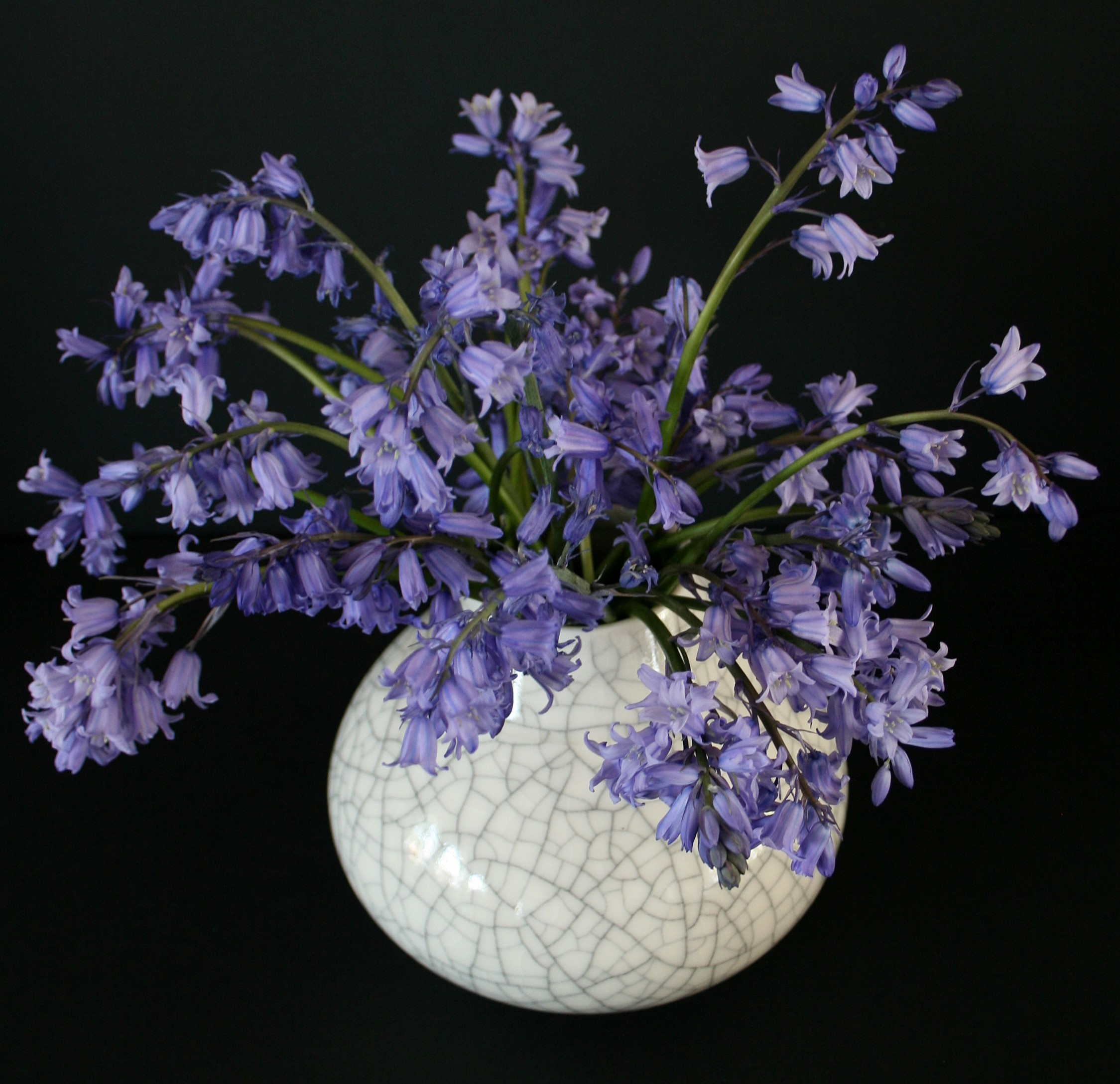 https://0501.nccdn.net/4_2/000/000/076/de9/bluebells-in-porcelain-crackle-vase-2249x2177.jpg