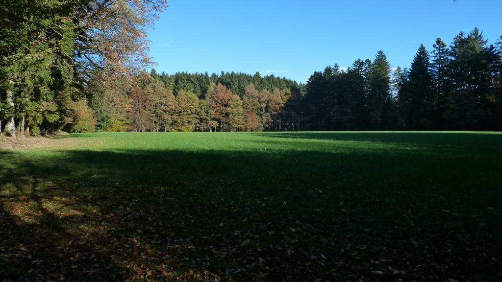 Blick über die Galgenwiese im Galgenholz, Friedburg, Ortschaft Holz 1899 fand man im Galgenholz fünf Grabhügel aus der Zeit um 500 vor Christus. Sie weisen einen Durchmesser von 9 bis 16 m und eine Höhe von 0,5 bis 1 m auf.