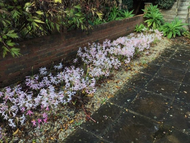Hardy Nerines outside the Five Arrows Gallery