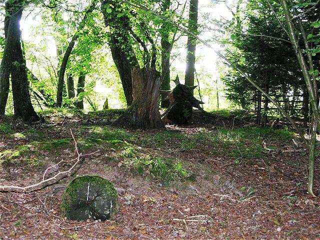 Mystischer Ort unter Eichen