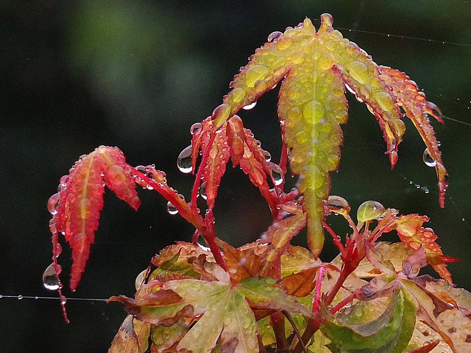 My Wet Garden