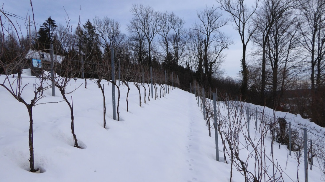 Oberteil des Weingartens