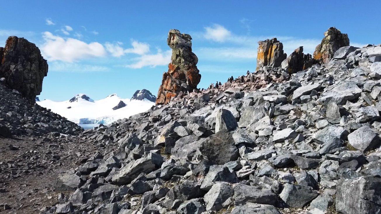 Brutkolonie - auf den Felsen