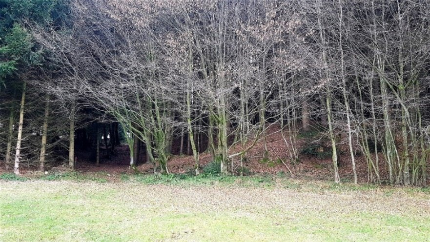 Am Eingang zum Waldstreifen