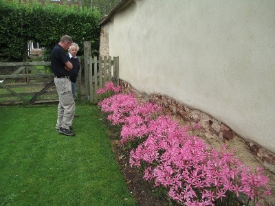 Steve and Jonny in discussion about Nerine Bowdenii varieties.